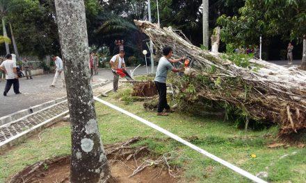 TRC BPBD Provinsi Lakukan Pembersihan Pohon Tumbang